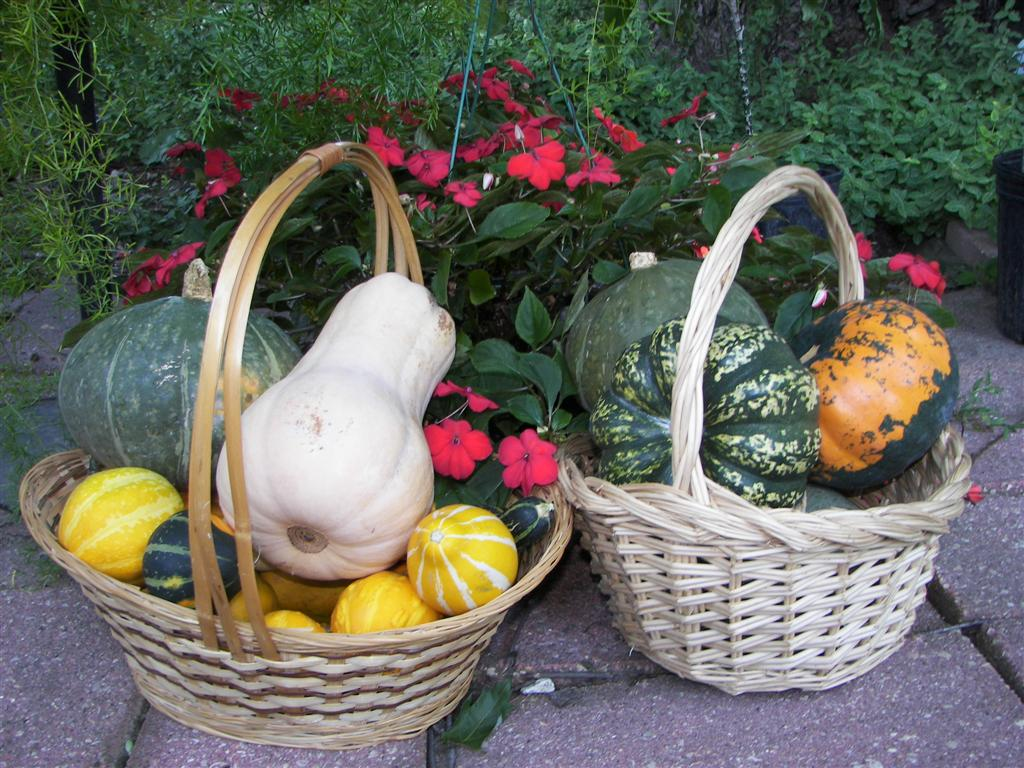 SQUASHES IN BASKET